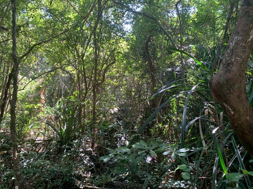 hktrail bush