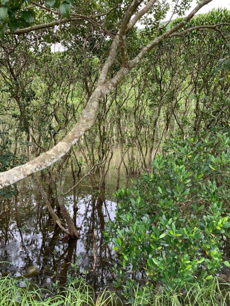 HKウィルソン貯水池