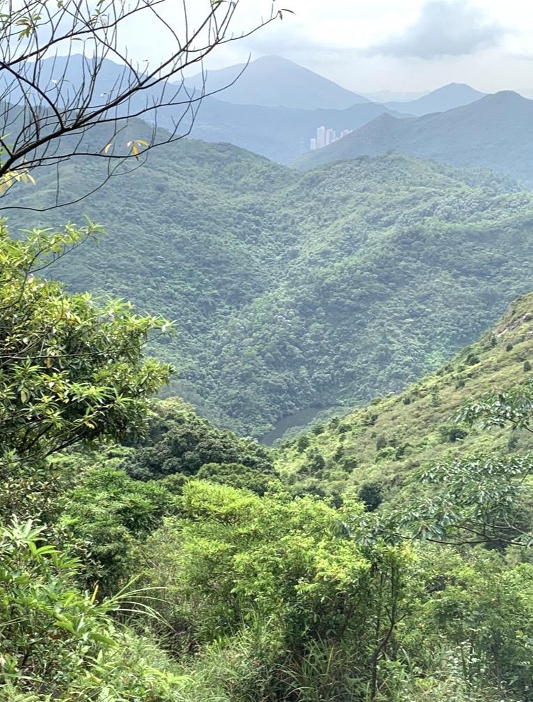 HKウィルソン山美4