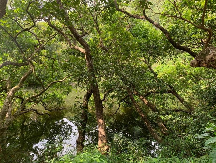 HKウィルソン貯水池3