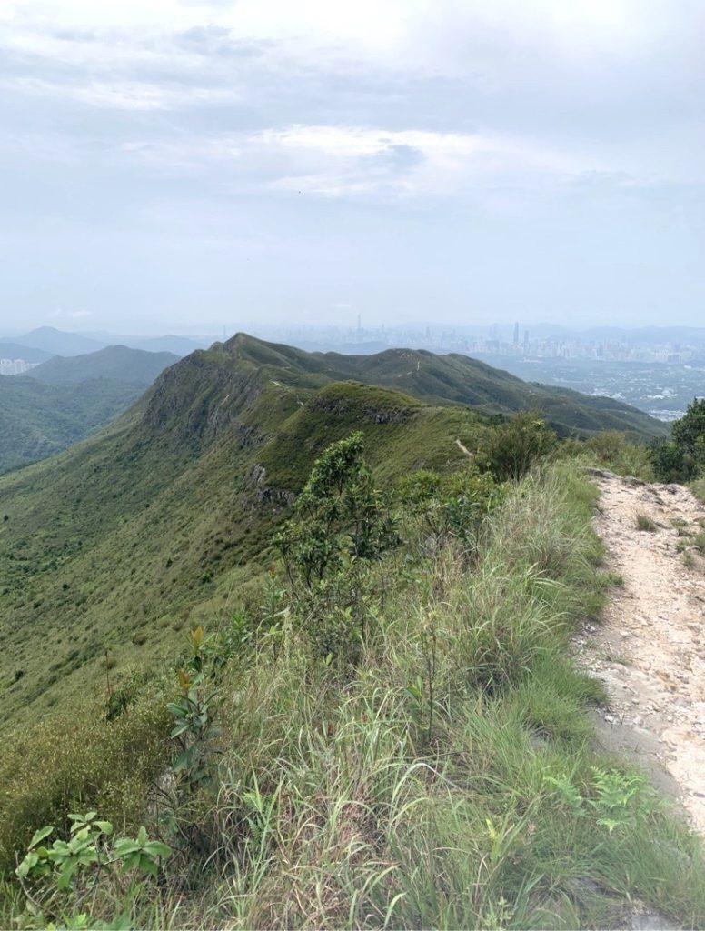HKウィルソン山美1