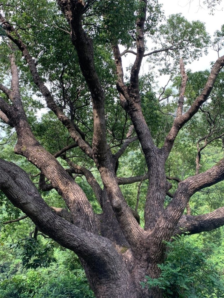 HKウィルソン貯水池木