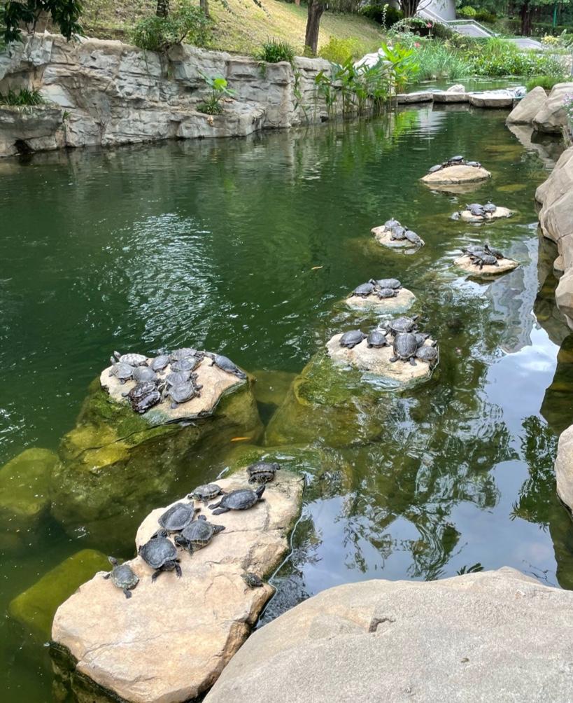 香港公園散歩池